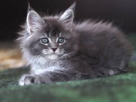 Кошка Л 3
