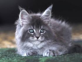 Кошка Л_3