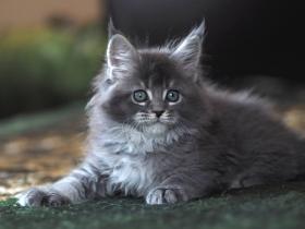 Кошка --3