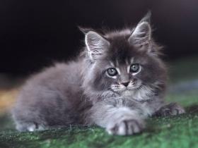 Кошка-3