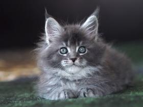Кошка 3