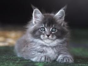 Кошка L3