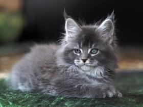 Кошка L__3