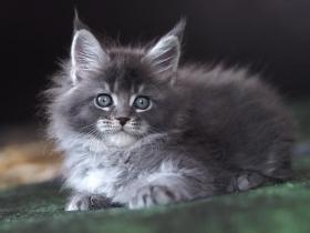 Кошка__3
